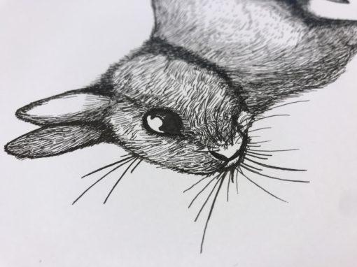 Zeichnung Kaninchen