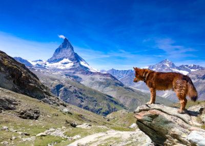 Zermatt & matterhorn (16)